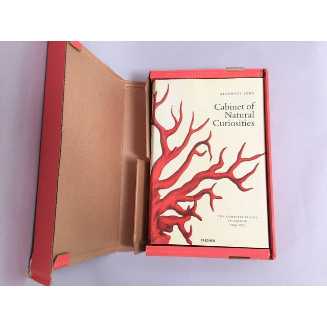 'Cabinet of Natural Curiosities' Oversized Coffee Table Book For Sale - Image 10 of 11