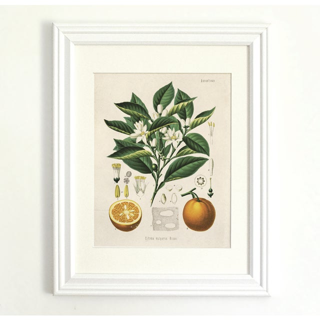 Botanical Orange Citrus Fruit Print Poster - Image 3 of 3
