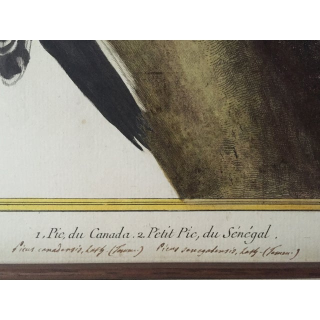 18th-C. Martinet Ornithological Engraving For Sale In New York - Image 6 of 6