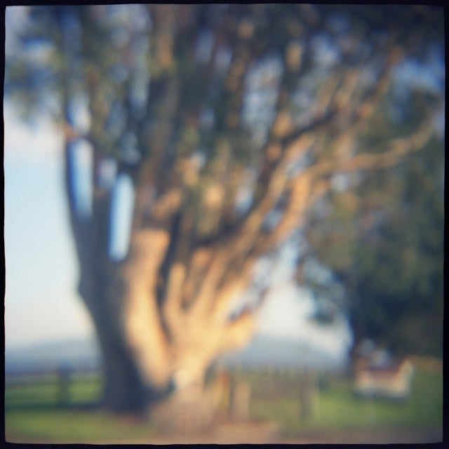 """Eucalyptus"" film toy camera image from the series ""Remembered Landscapes."" Sonoma, Ca. 10x10 image printed on 11x14..."