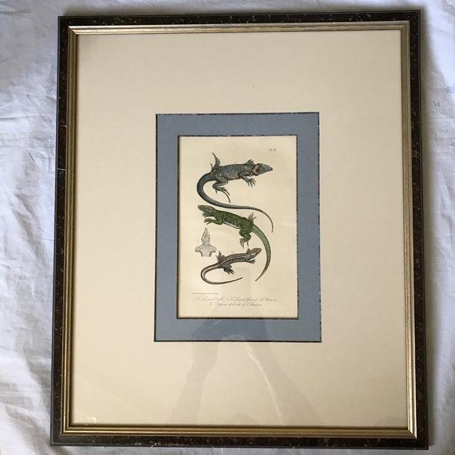 Custom Framed 1832 French Lizard Print - Image 2 of 8