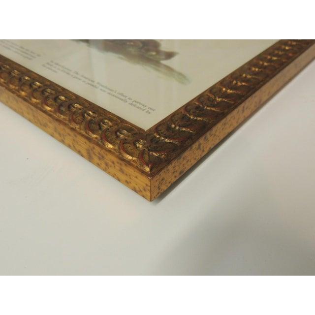 Set of 3 Bird Prints Framed in Gold Frames For Sale In Miami - Image 6 of 7