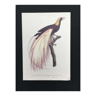 1950's French Tropical Bird Lithograph For Sale