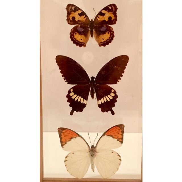 Shadow Box Framed Butterflies - A Pair - Image 5 of 7