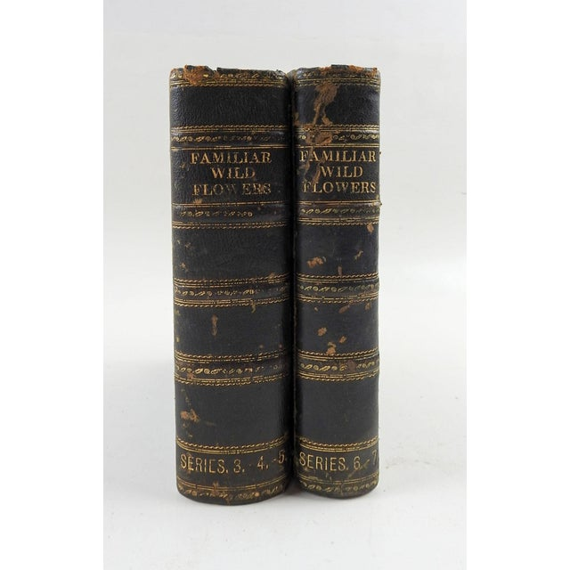Familiar Wild Flowers 1902 - 2 Volumes For Sale - Image 11 of 11