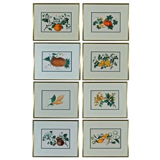 Chinese Fruit Watercolor Paintings on Pith Paper - Set of 8 Preview