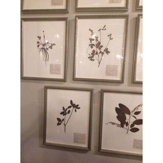 Traditional Antique Herbarium Framed Plants - Set of 8 For Sale - Image 3 of 9