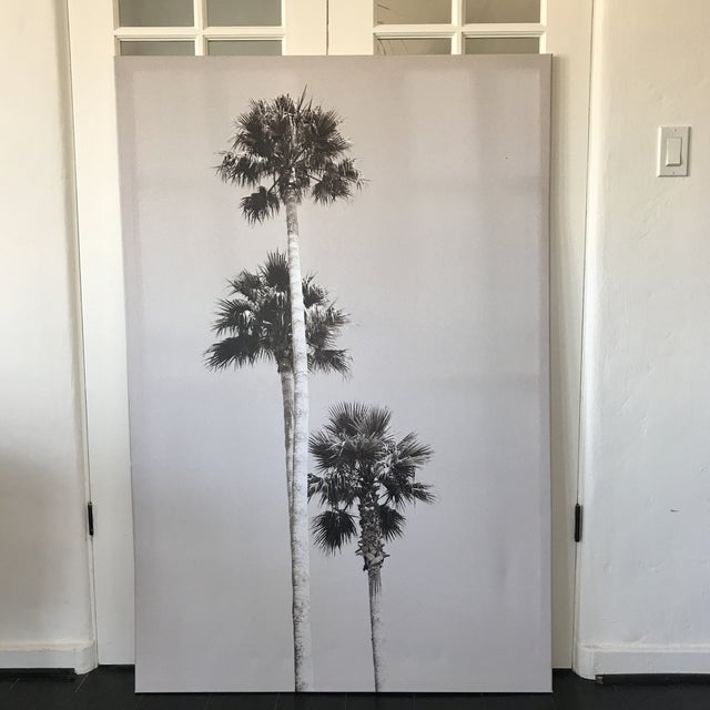 A gallery wrapped extra large, high resolution palm tree print.