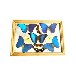 1960s Vintage Wooden Framed 10 Real Butterflies Display For Sale