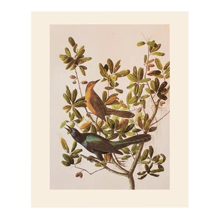 Boat-Tailed Grakle by John J. Audubon, 1966 Vintage Cottage Style Print For Sale