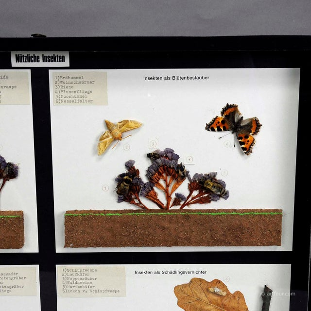 Cabin Vintage School Teaching Display Of Usefull Insects For Sale - Image 3 of 6