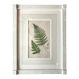 19th Century French Broad Prickly Toothed Fern Lithograph For Sale