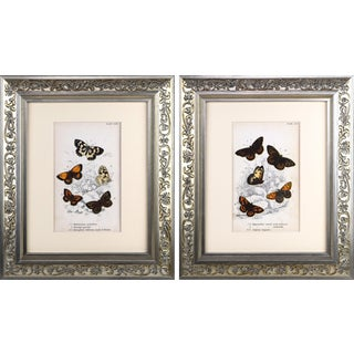 19th Century English Butterfly Prints - a Pair For Sale
