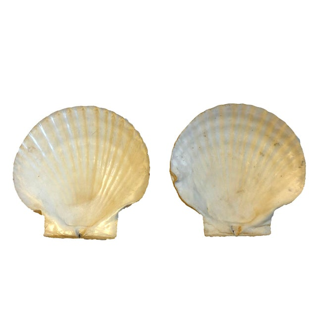 """Set of 2 vintage clam shells. Beautiful natural decorative objects or shallow dishes for jewelry. Dimensions: 6.5"""" x 6.5""""..."""