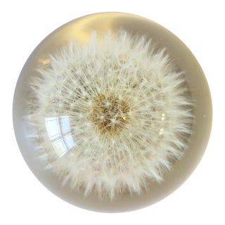 '90s Modern Lucite Encased Dandelion Flower Decorative Object or Paperweight For Sale