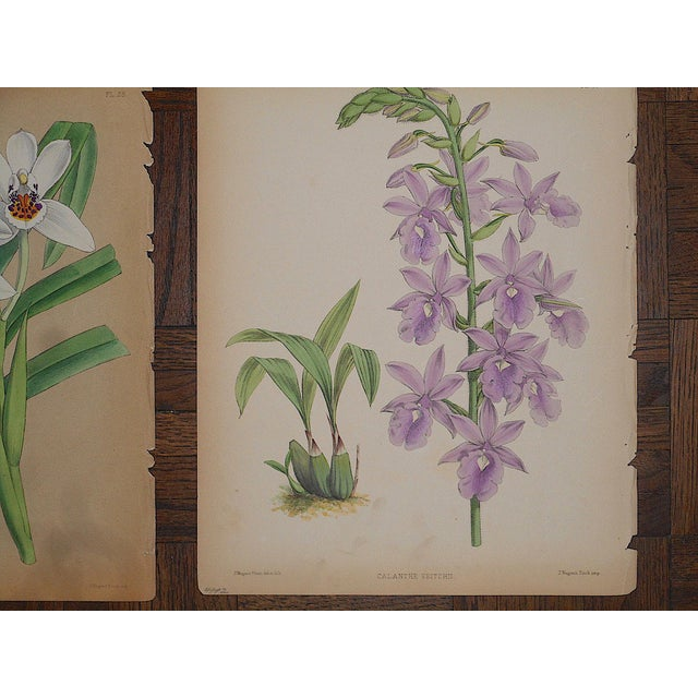 Realism Antique 19th Century Orchid Lithographs-Set of 3 For Sale - Image 3 of 7