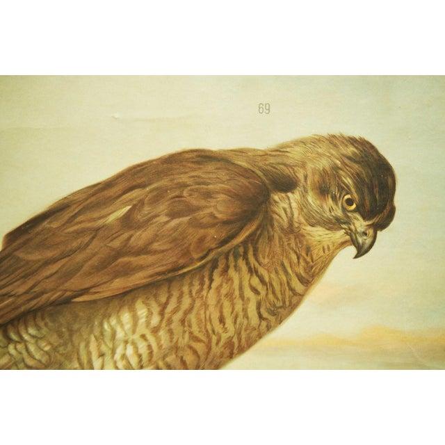 German birds of prey school poster For Sale - Image 6 of 7