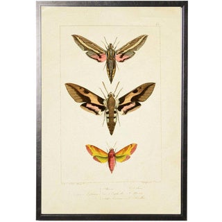 "Colorful Moth Trio Plate 45 - 20.5"" X 29.5"" For Sale"