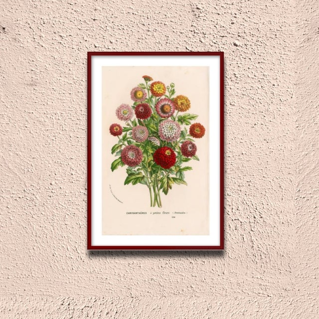 Vintage Mums Archival Print For Sale - Image 5 of 5