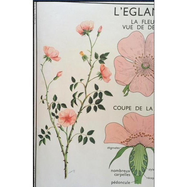 Vintage French School Wild Rose Poster - Image 3 of 7