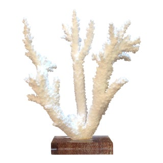 Authentic Branch Coral on Lucite Stand For Sale