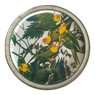 Vintage Mid Century Audubon Carolina Parakeet Lithograph Sunshine Biscuit Round Tin Serving Tray For Sale