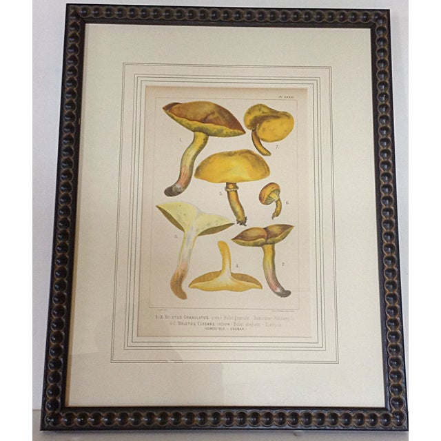 Framed 1880 German botanical lithograph of yellow capped mushrooms professionally framed with French matting. Dimensions...