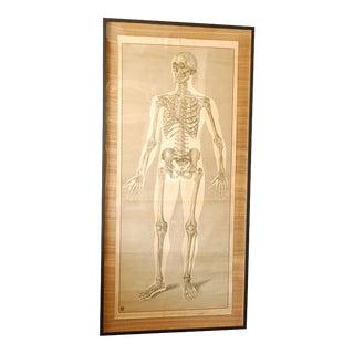 Framed Vintage Human Anatomy Poster