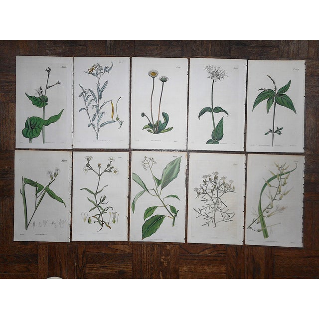 Antique 19th Century Botanical Engravings-Period Hand Color-Set of 10 For Sale - Image 4 of 4