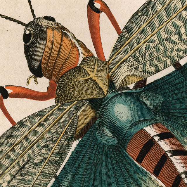 Antique 'Grasshopper' Archival Print For Sale - Image 4 of 4