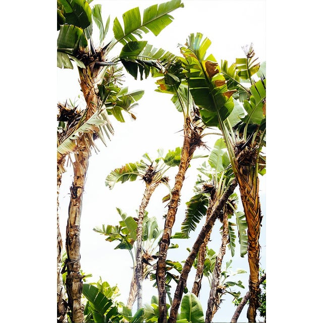 "Not Yet Made - Made To Order ""Tropical Days"" Original Photograph For Sale - Image 5 of 5"