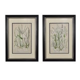 Image of Late 19th Century Antique Botanical Grass Framed Prints - A Pair For Sale
