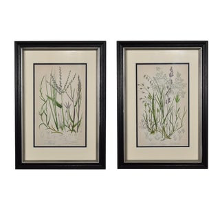 Late 19th Century Antique Botanical Grass Framed Prints - A Pair For Sale