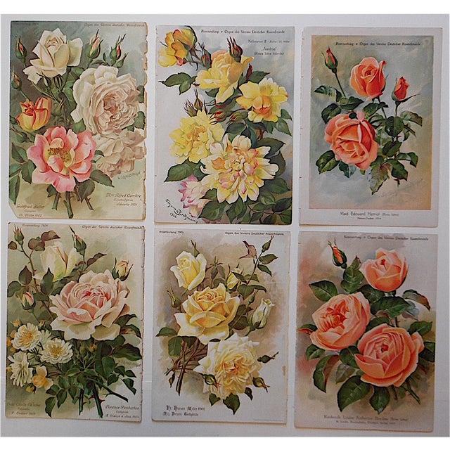 Cottage Antique Botanical Lithographs Roses - Set of 6 For Sale - Image 3 of 3