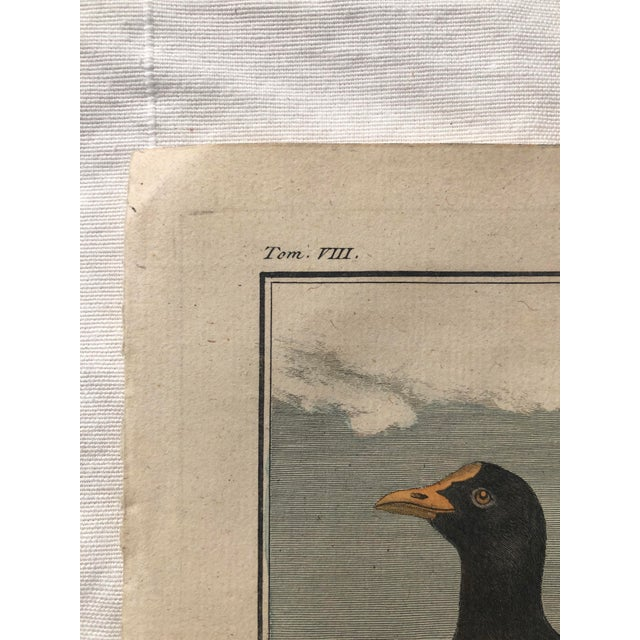 18th Century French Bird Engraving Signed by Jacques De Sève Featuring an Eurasian Coot For Sale - Image 11 of 13