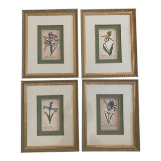 18th Century Original Hand Colored Copperplate Engravings - Set of 4 For Sale