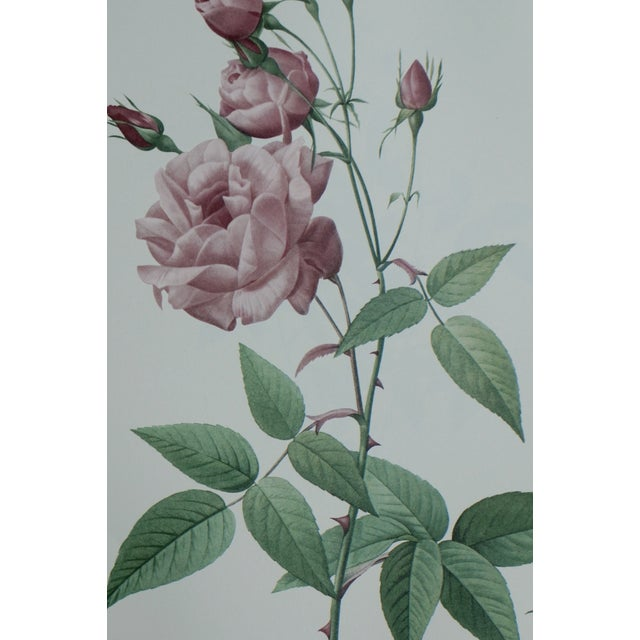 Reproduction Pink Rose Botanical Print For Sale - Image 4 of 5