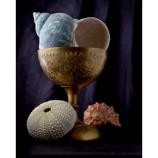 """""""Chalice With Seashells"""" Contemporary Photograph by John Manno (20""""x25"""") For Sale"""