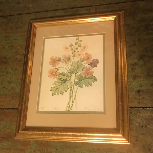 Engraving Vintage PJ Redoute Botanical Framed Prints - A Pair For Sale - Image 7 of 13
