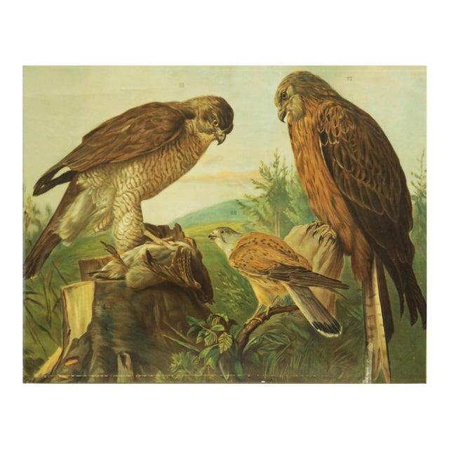 German birds of prey school poster For Sale