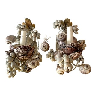 Marginella and Pectin Seashell Decorated Sconces - a Pair For Sale