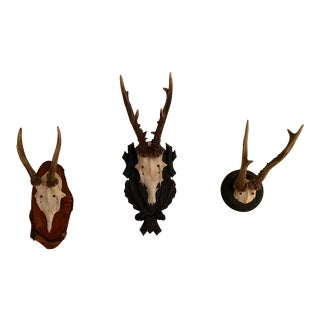 Antler Wall Mounts - Set of 3 For Sale