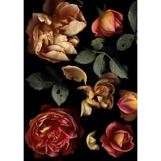 Rosa Lady of Shallot ('Ausnyson') - Floral Photography by Francesca Wilkinson For Sale