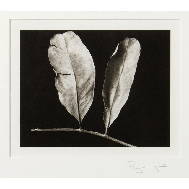 Platinum Print - Two Leaves by Ryuijie - Image 2 of 2