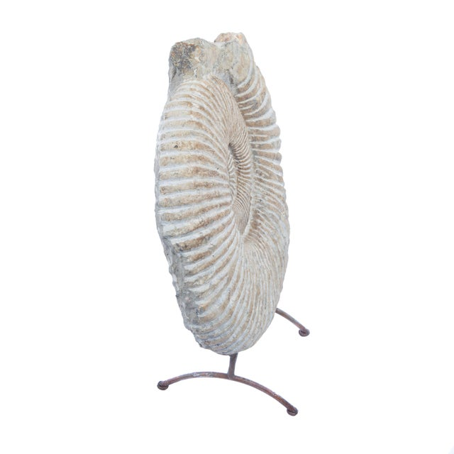 15th Century & Earlier ANCIENT AMMONITE FOSSIL STATUE For Sale - Image 5 of 10