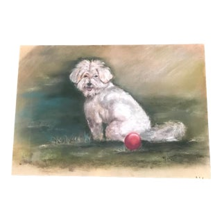 French Maltese Dog Pastel Drawing