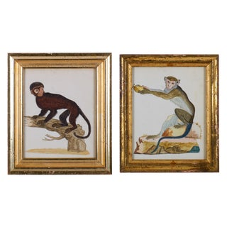 18th Century Antique Monkey Watercolor Paintings - A Pair For Sale