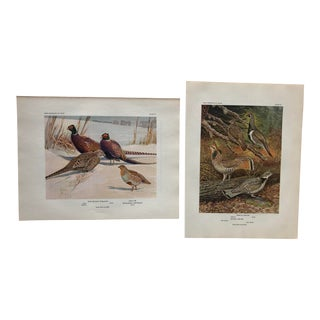 1934 Pheasant Illustrated Color Prints - a Pair For Sale