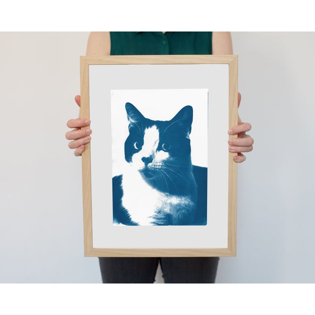 Limited Edition, Cyanotype Print- Cat Portait - Image 2 of 4