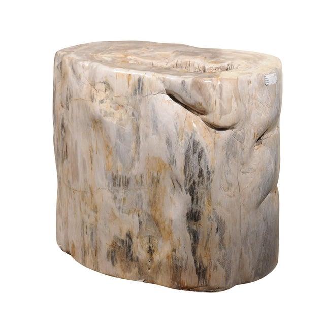 Impressively Large Petrified Wood Table Base For Sale - Image 12 of 12